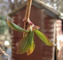 close leaf