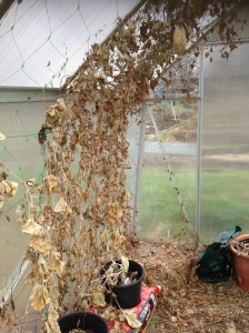 messy greenhouse
