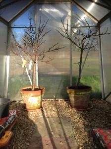 tidy greenhouse