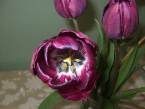 inside purple tulip