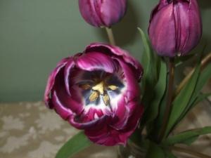 inside purple tulip