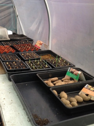 Polytunnel growing