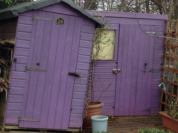 purple shed