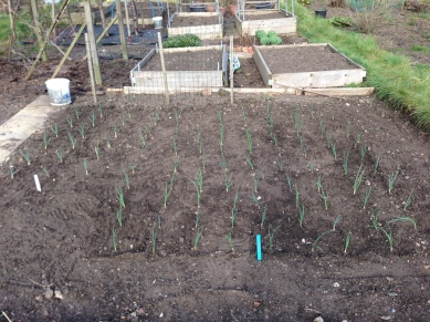 onions and garli